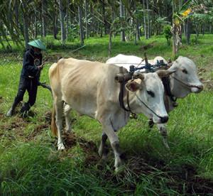 B jordbruk