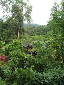 b hus i djungel